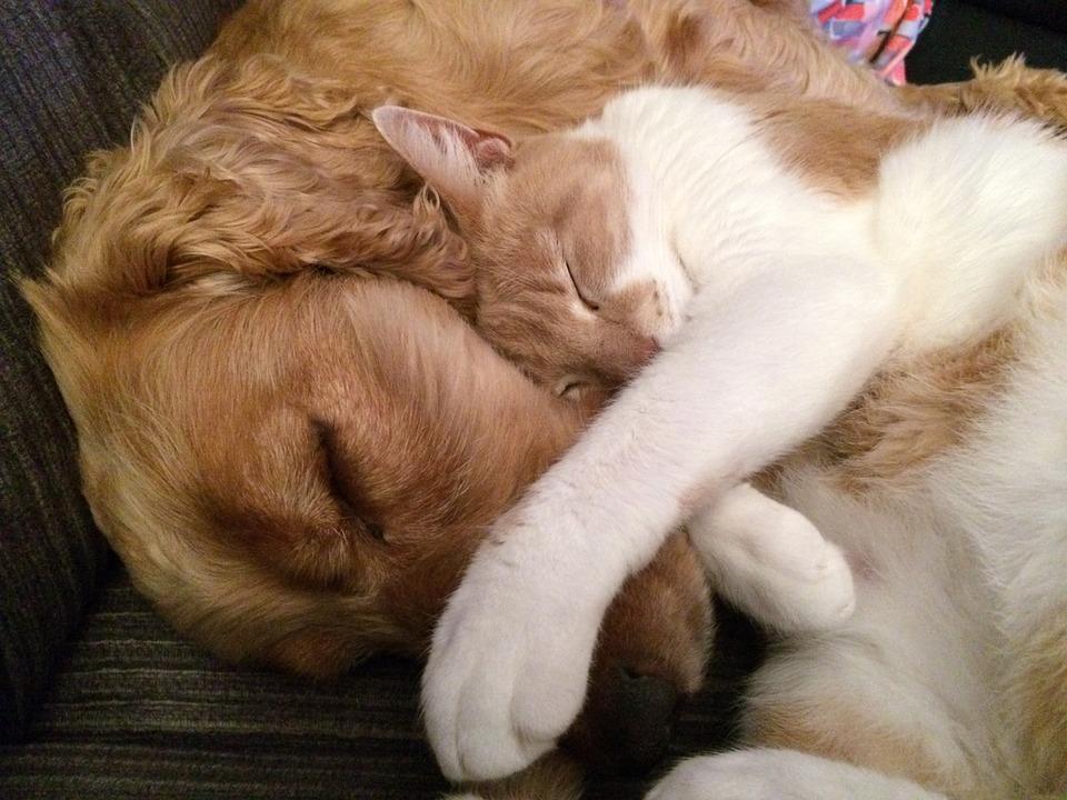 Licença de cães e gatos